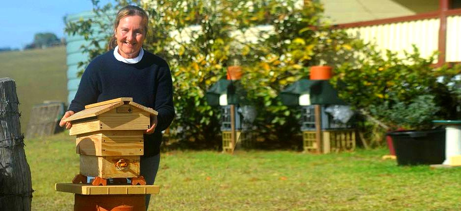 Native bee honey set to be officially recognised