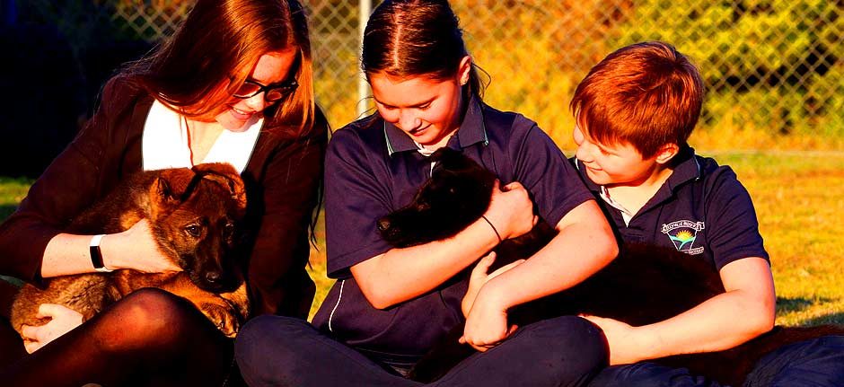 The NSW Police Force welcomes three new police puppies